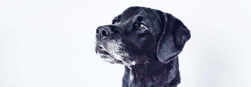 cosequin, el condroprotector para perros